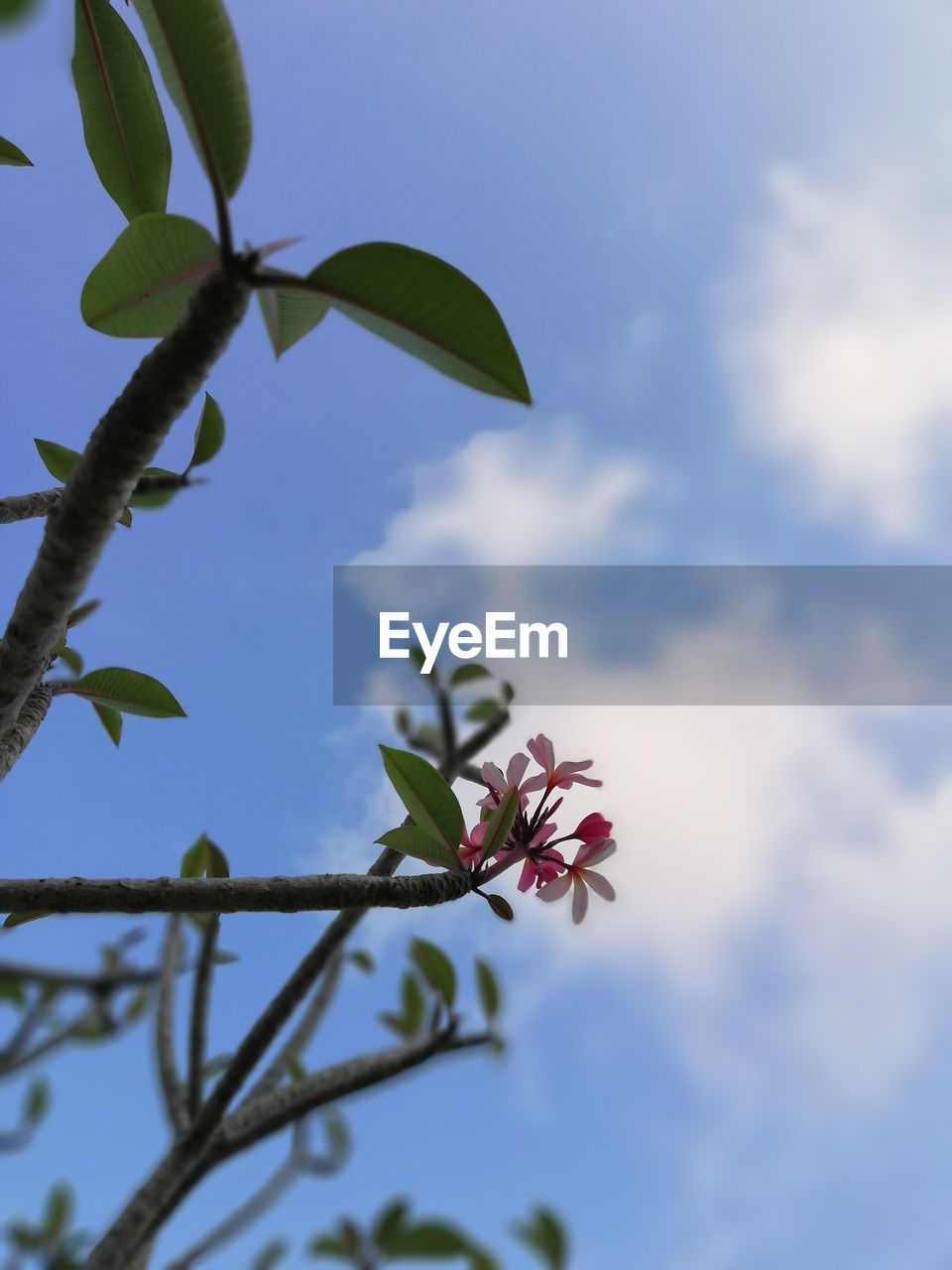 plant, flower, flowering plant, growth, beauty in nature, fragility, vulnerability, freshness, sky, low angle view, leaf, plant part, nature, petal, close-up, day, no people, cloud - sky, outdoors, tree, flower head, spring