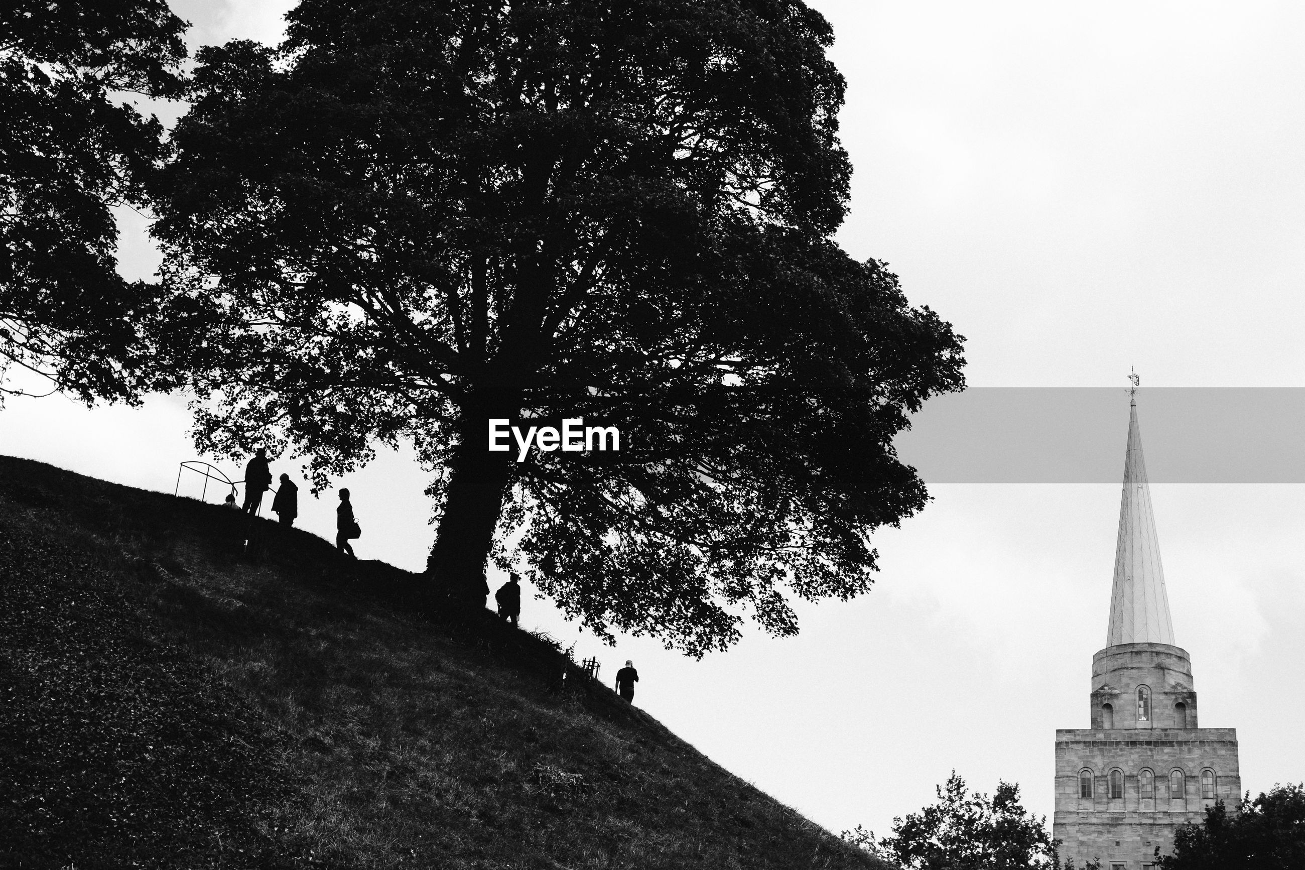 Low angle view of trees and hill against sky