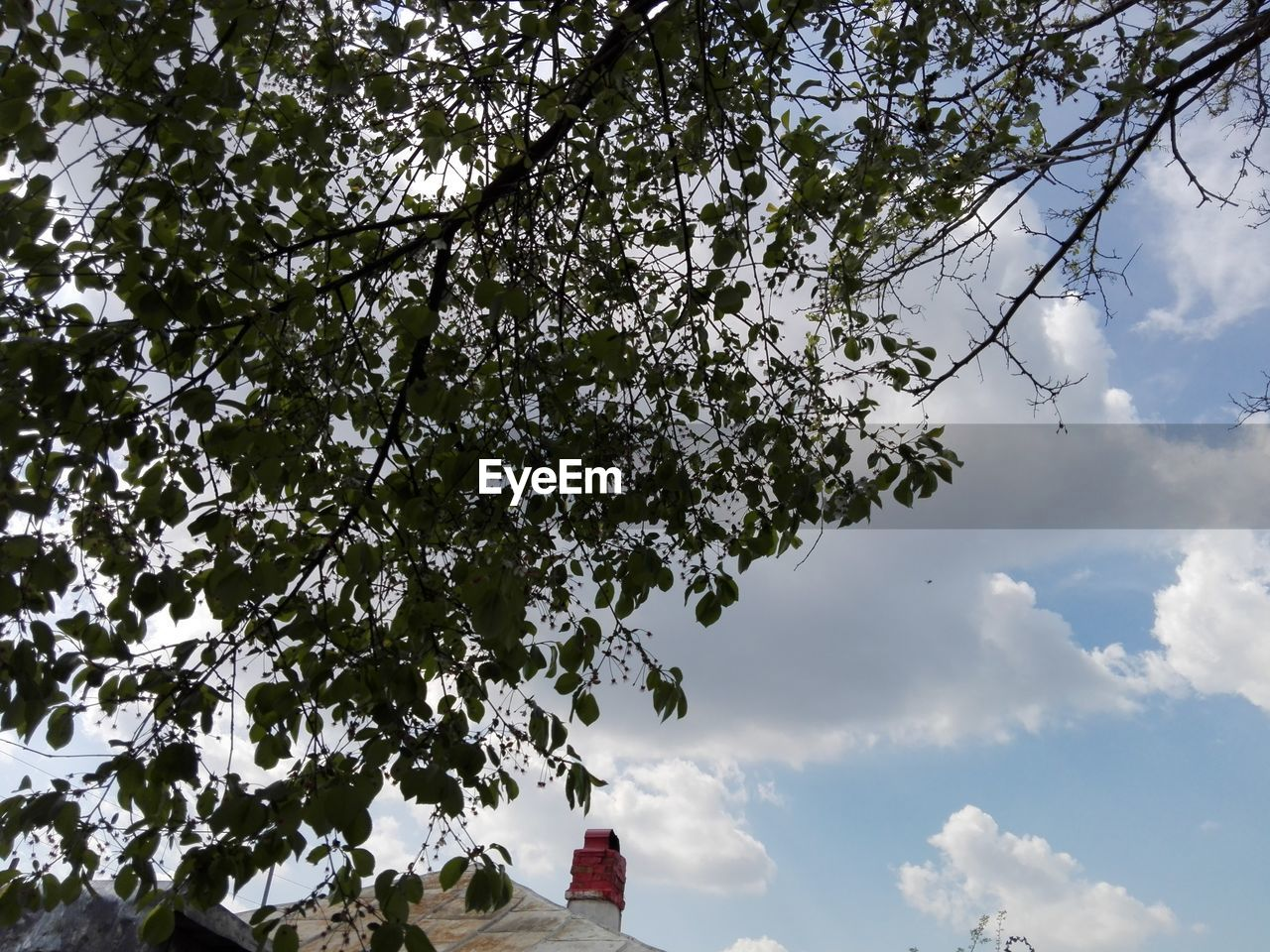 tree, low angle view, sky, day, branch, growth, nature, cloud - sky, beauty in nature, outdoors, no people, freshness