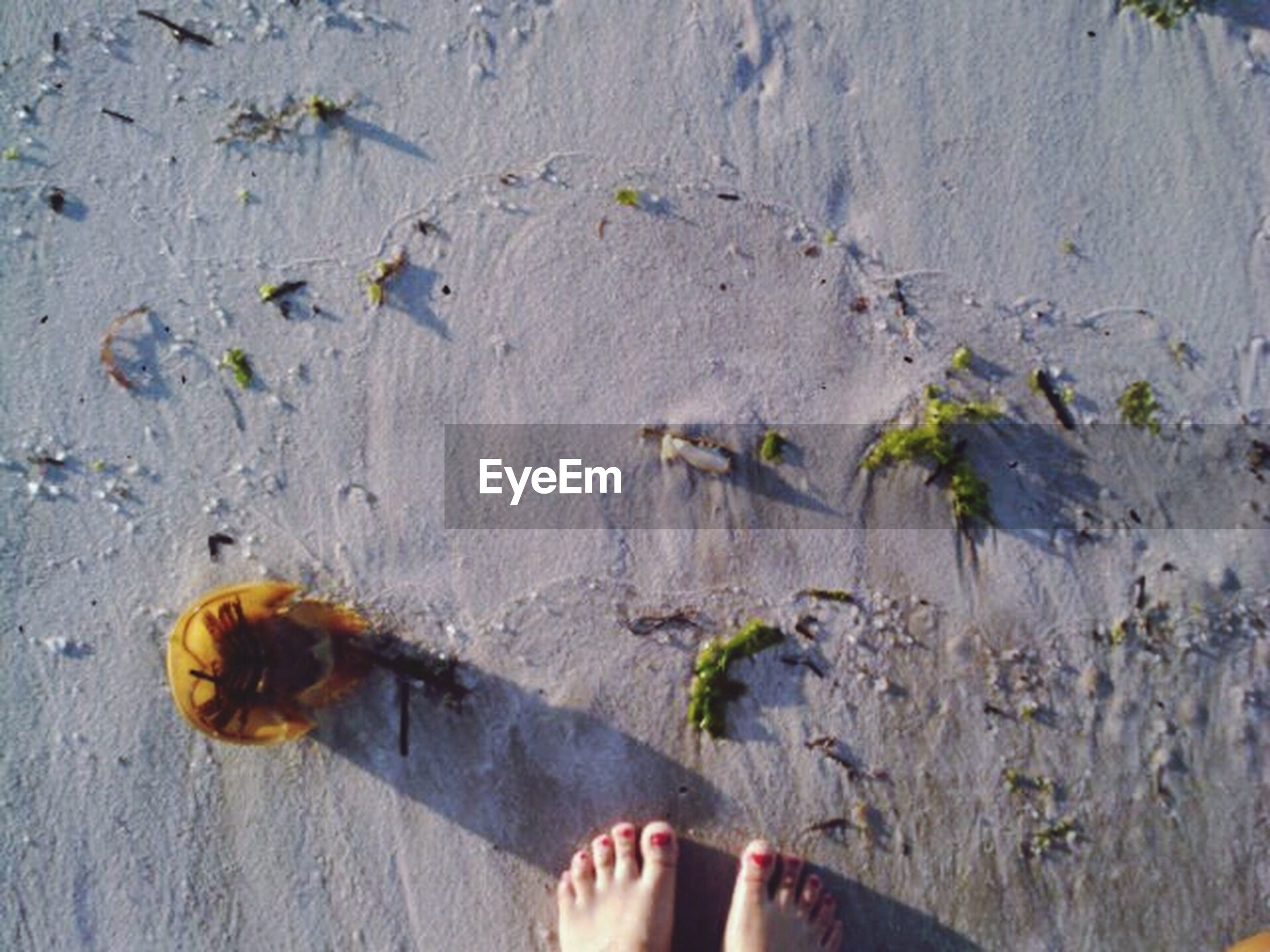 low section, person, personal perspective, water, human foot, high angle view, shoe, unrecognizable person, part of, lifestyles, footwear, leisure activity, standing, nature, day, men, outdoors