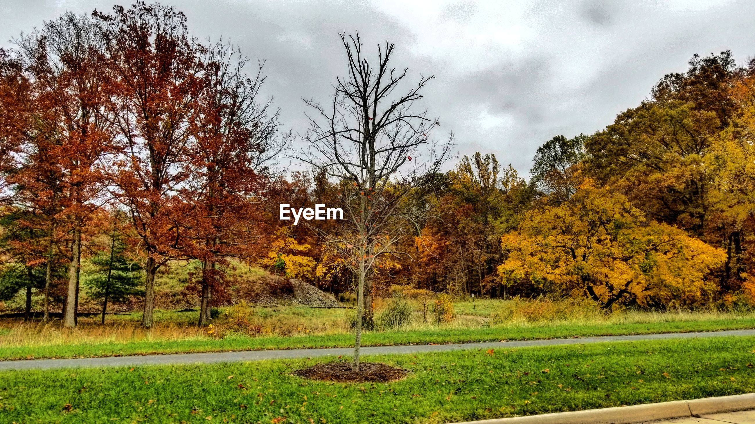 SCENIC VIEW OF TREES DURING AUTUMN