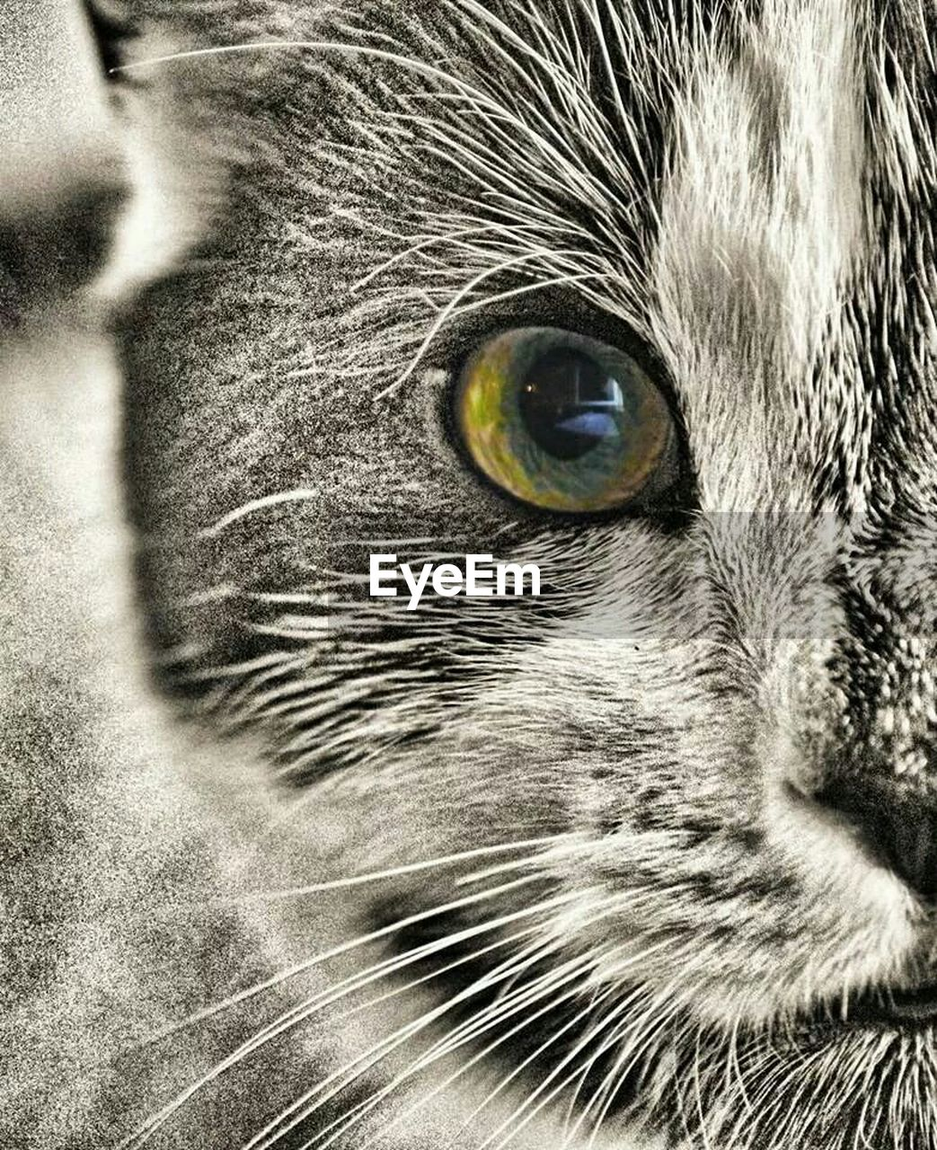one animal, pets, animal themes, domestic animals, animal head, animal eye, domestic cat, portrait, whisker, close-up, looking at camera, feline, no people, mammal, outdoors, nature, day