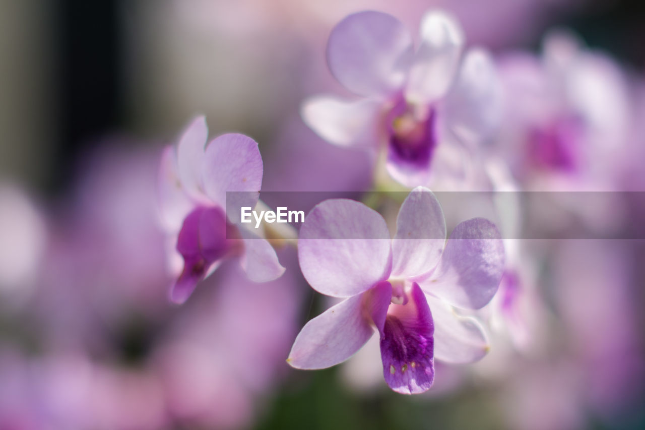 flower, beauty in nature, nature, purple, growth, petal, plant, fragility, no people, close-up, freshness, blooming, outdoors, day