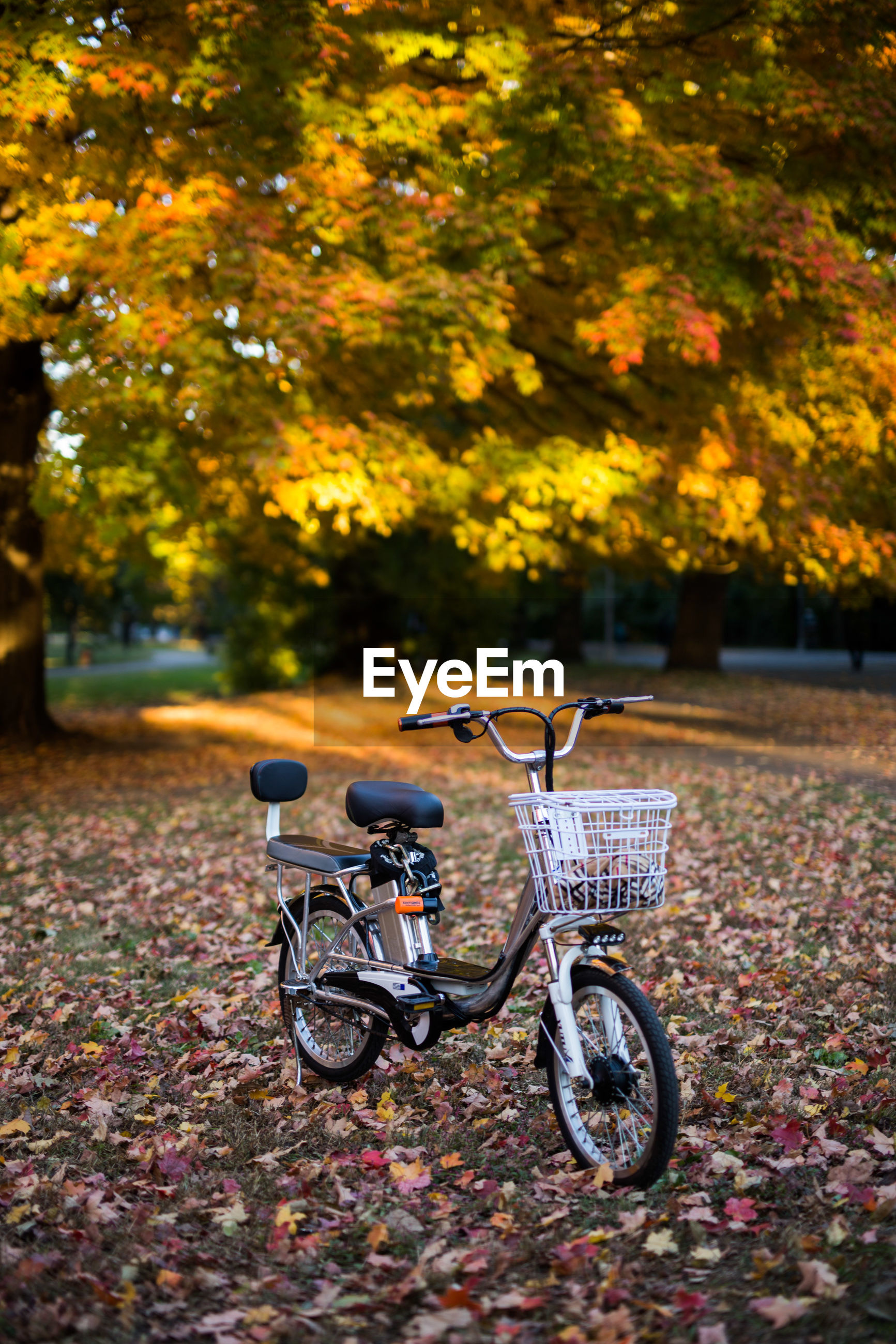 Bicycle parked on footpath during autumn