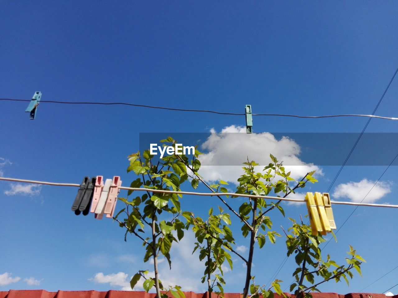 sky, low angle view, blue, plant, hanging, cable, nature, no people, day, clothesline, clothespin, electricity, cloud - sky, outdoors, sunlight, tree, copy space, clothing, architecture, power line, power supply