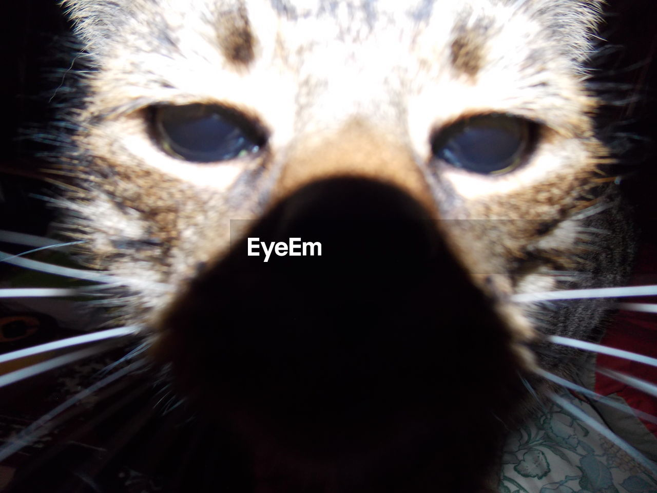 one animal, animal themes, close-up, looking at camera, animal head, animal body part, portrait, animal wildlife, animals in the wild, domestic animals, no people, mammal, day, pets, indoors, owl, eyeball