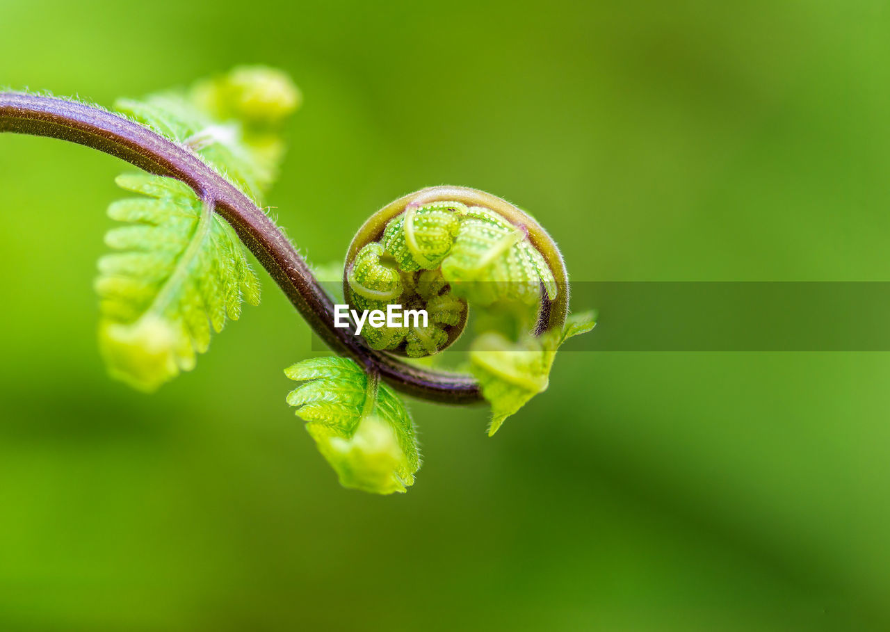 green color, close-up, plant, growth, no people, nature, beauty in nature, focus on foreground, selective focus, day, plant part, leaf, fragility, animal wildlife, vulnerability, outdoors, tendril, invertebrate, plant stem, animal themes