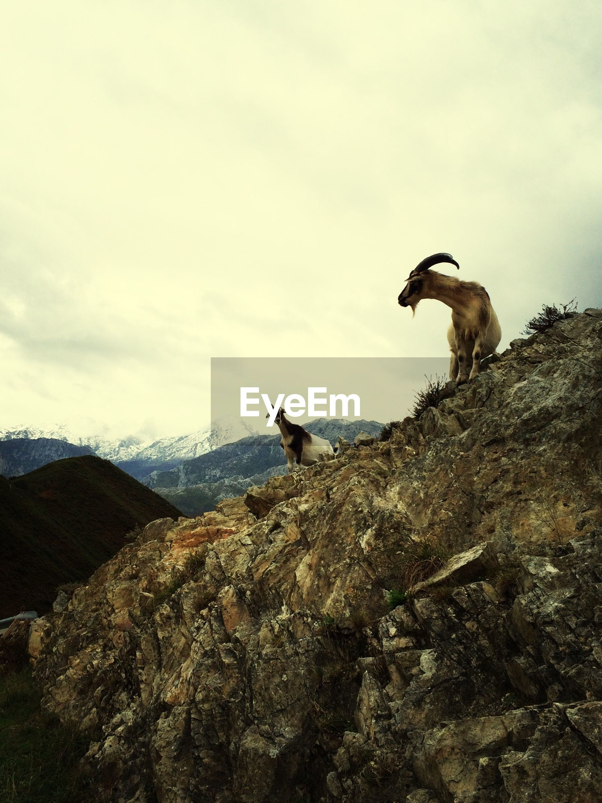 animal themes, sky, mountain, one animal, rock - object, cloud - sky, low angle view, animals in the wild, nature, wildlife, full length, tranquility, mountain range, tranquil scene, landscape, day, rocky mountains, beauty in nature, cloud, scenics