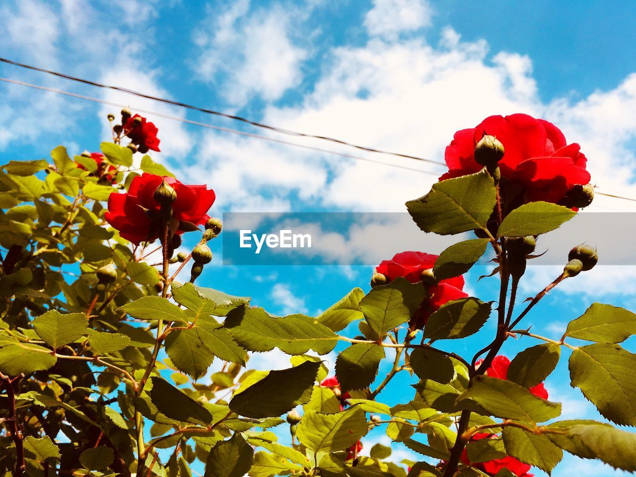 Low Angle View Of Red Flowering Plant Against Sky
