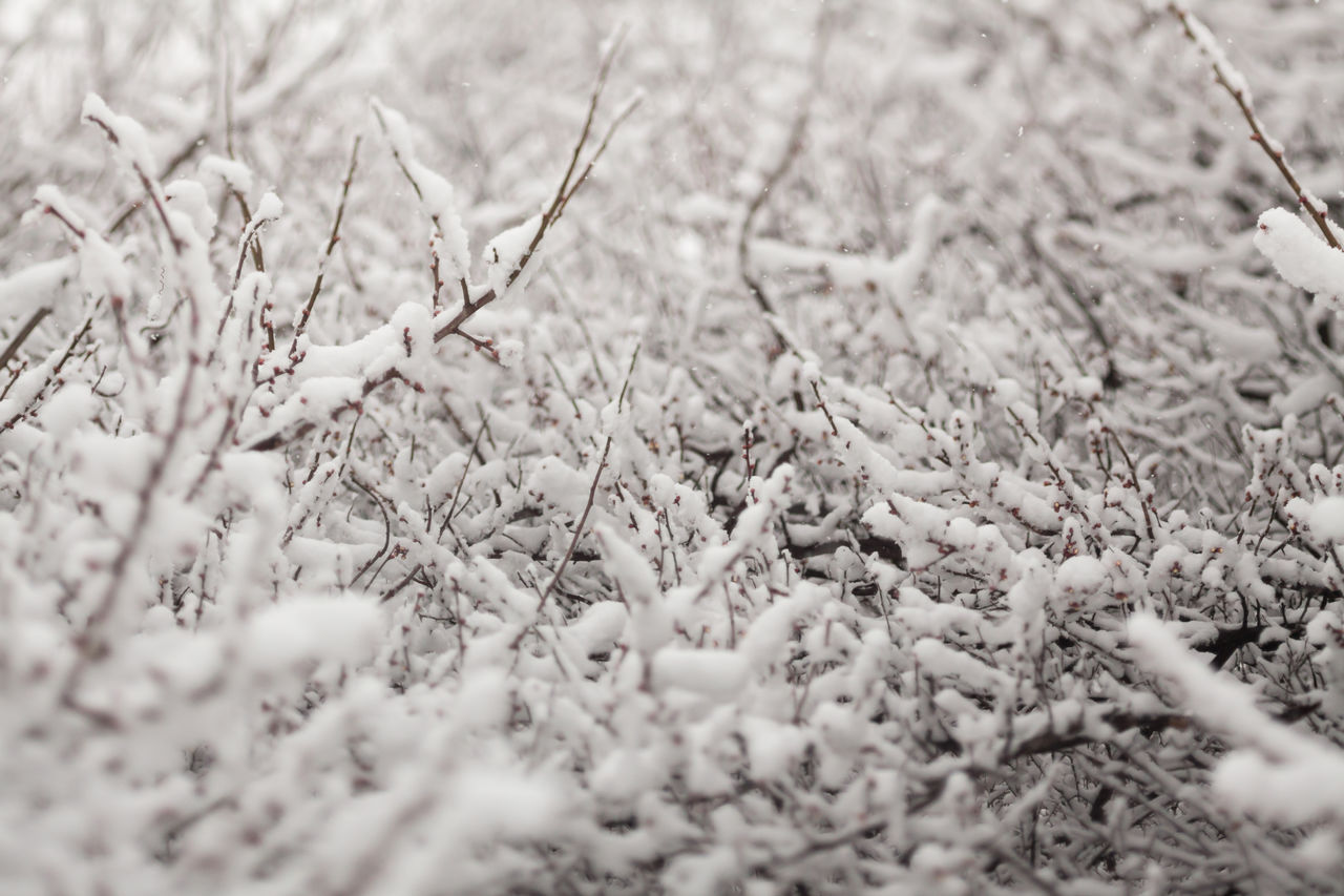 selective focus, nature, day, no people, outdoors, close-up, winter, cold temperature, backgrounds, beauty in nature, freshness