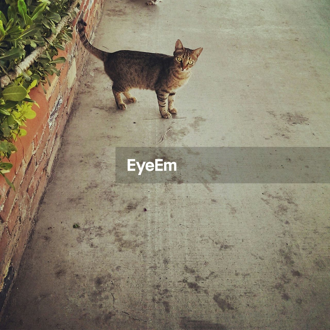 Cat Standing On Sidewalk