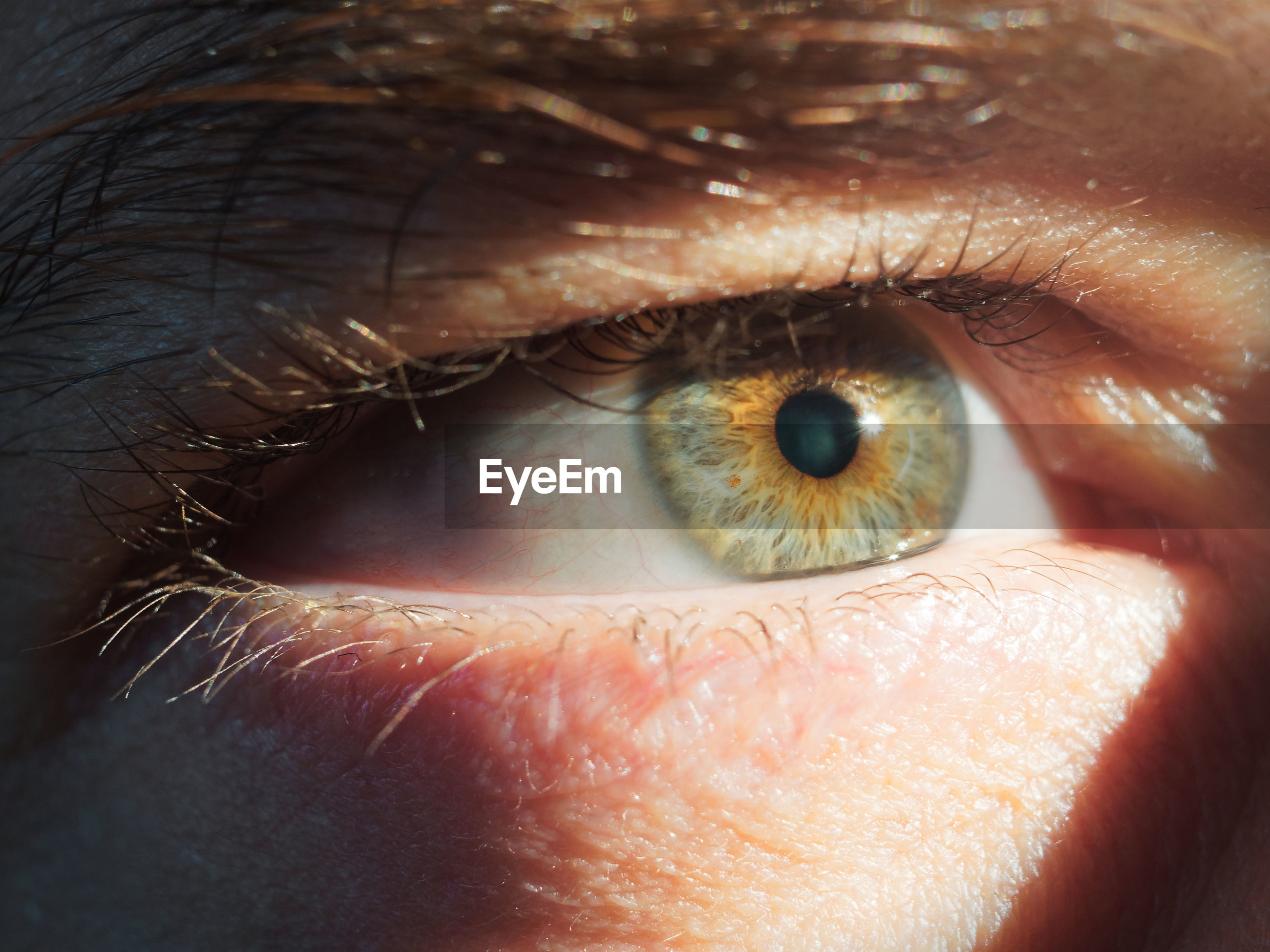 Close-up of cropped eye
