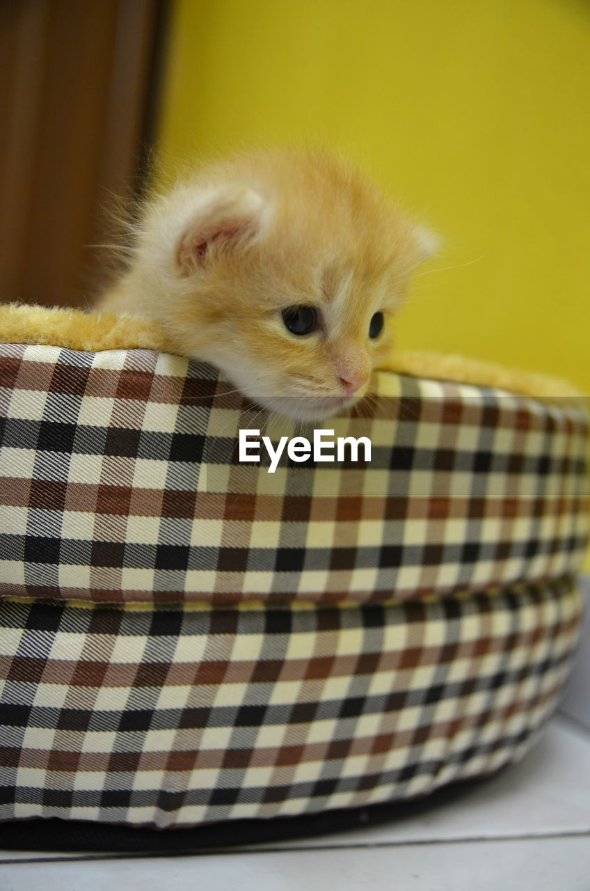 animal, animal themes, one animal, mammal, domestic, pets, domestic animals, vertebrate, cat, feline, checked pattern, domestic cat, basket, indoors, no people, portrait, whisker, close-up, looking at camera, kitten, animal head