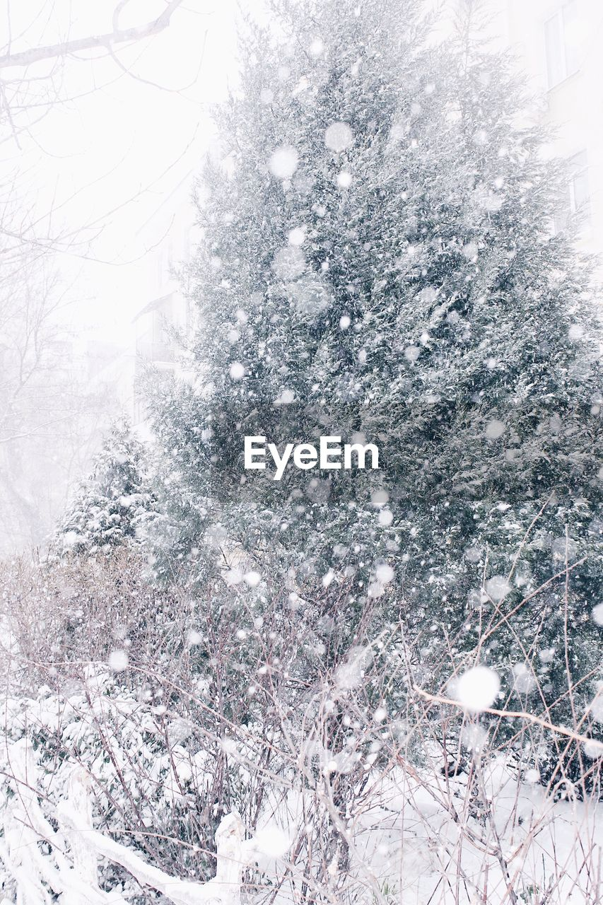 winter, cold temperature, snow, nature, weather, cold, frozen, no people, tree, day, beauty in nature, outdoors, ice, tranquility, ice crystal, close-up, snowing, backgrounds, snowflake, sky