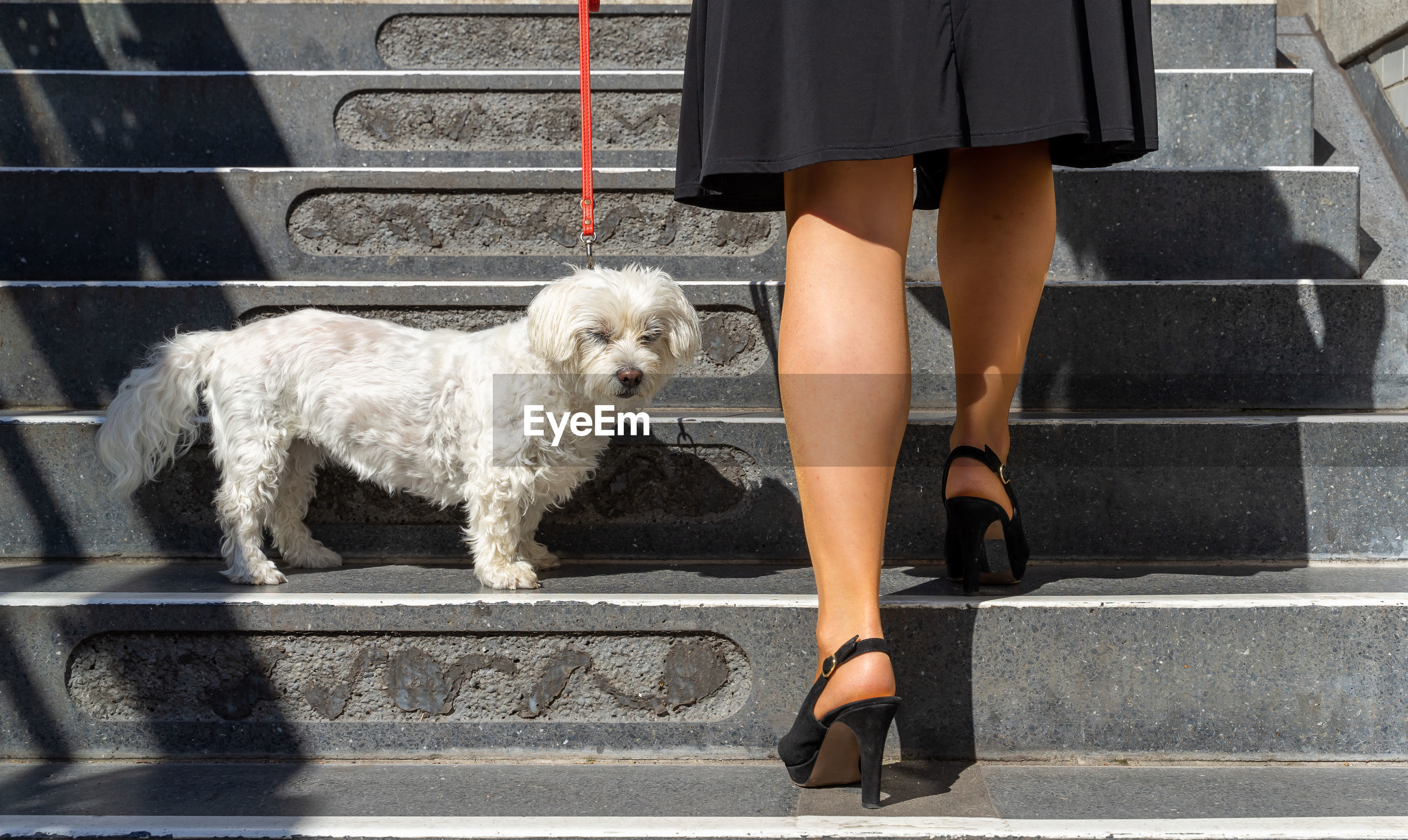 LOW SECTION OF WOMAN WITH DOG ON SIDEWALK