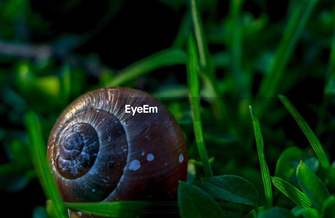 CLOSE-UP OF SNAIL ON PLANTS