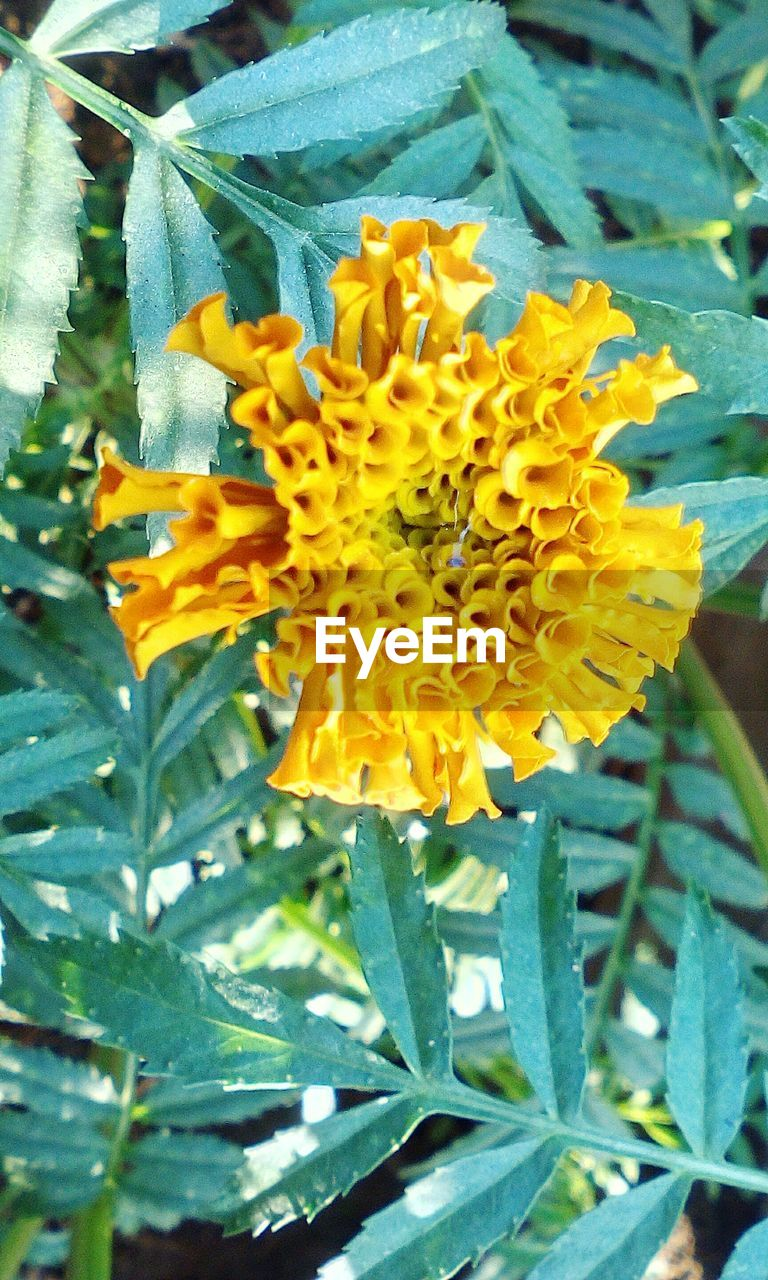 flower, growth, nature, plant, petal, fragility, beauty in nature, freshness, flower head, leaf, yellow, blooming, no people, day, outdoors, close-up
