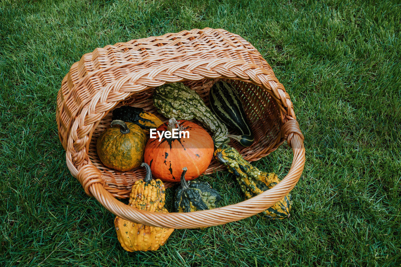 High angle view of pumpkin with basket on grassy field