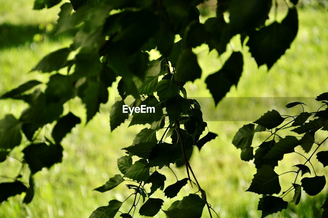 nature, growth, plant, no people, outdoors, leaf, beauty in nature, day, green color, close-up