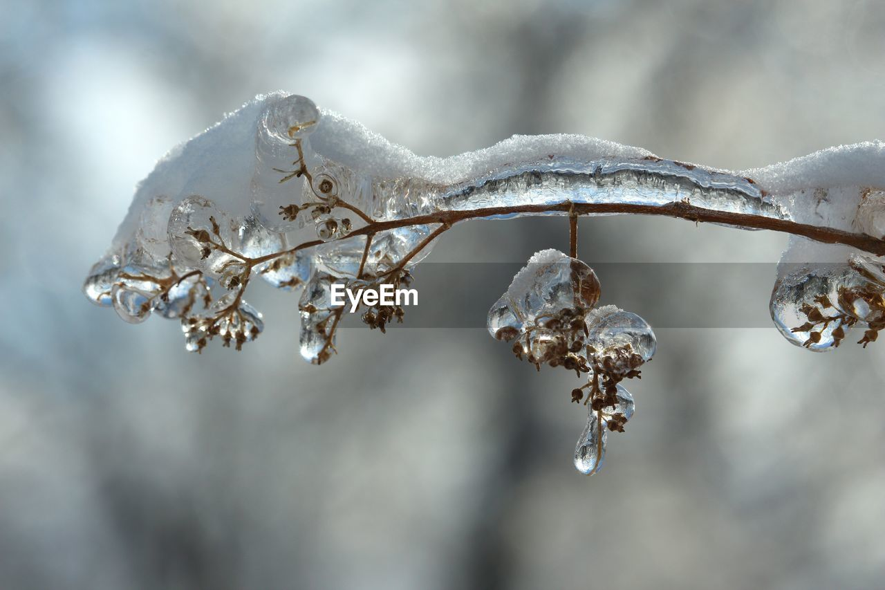 winter, cold temperature, snow, frozen, ice, focus on foreground, plant, no people, nature, day, close-up, beauty in nature, tranquility, selective focus, tree, outdoors, white color, twig, branch, icicle, blizzard, melting