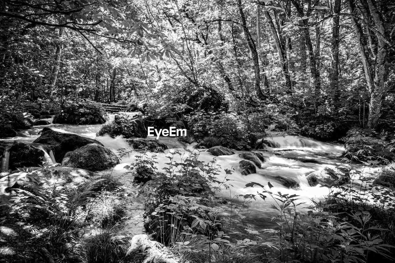 tree, plant, forest, land, nature, scenics - nature, beauty in nature, no people, flowing water, day, tranquility, water, environment, motion, outdoors, tranquil scene, flowing, rock, woodland, stream - flowing water