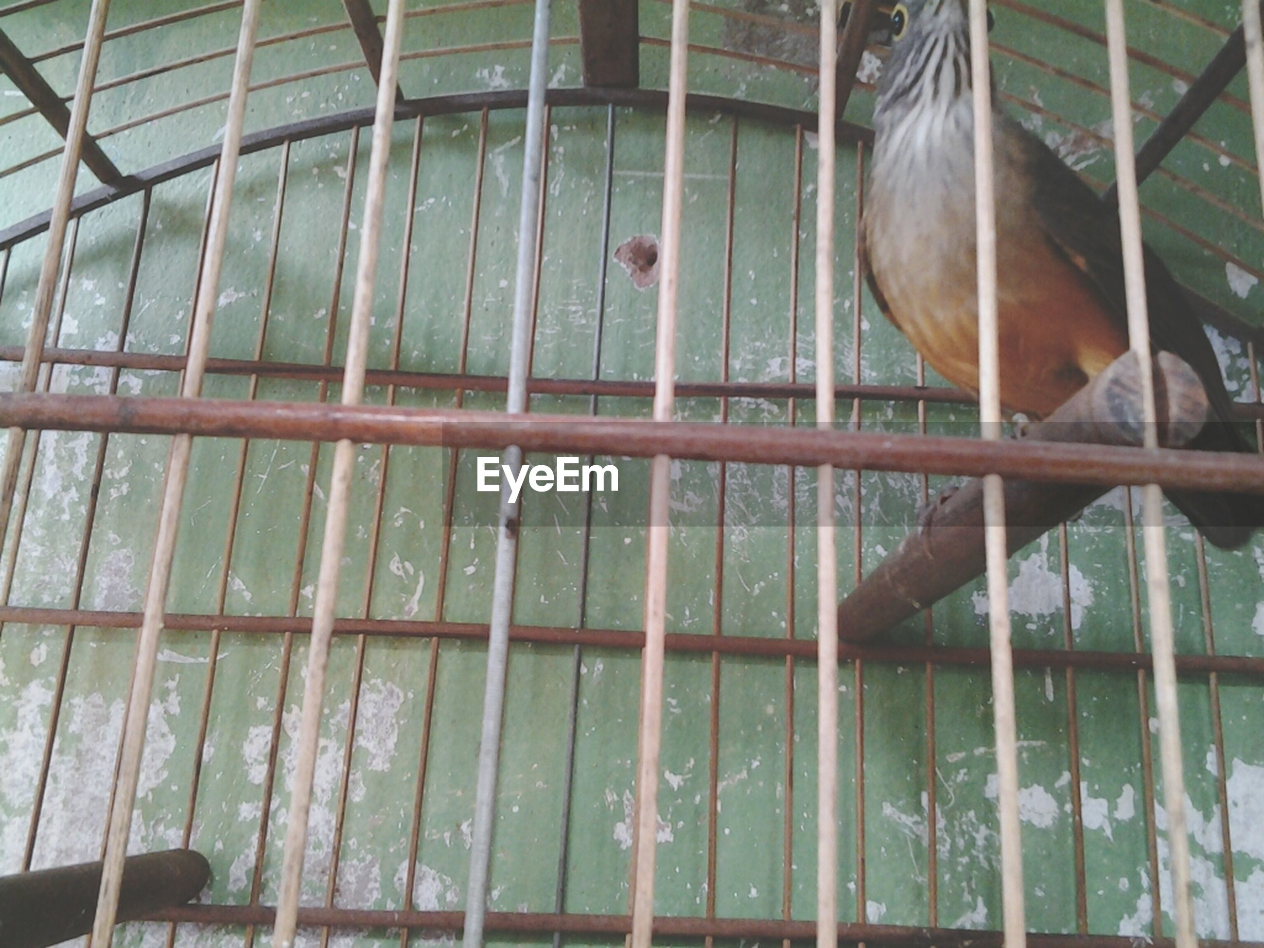 animal themes, one animal, domestic animals, mammal, animals in captivity, cage, fence, window, pets, indoors, zoo, wildlife, day, animals in the wild, metal, railing, close-up, no people, livestock, glass - material