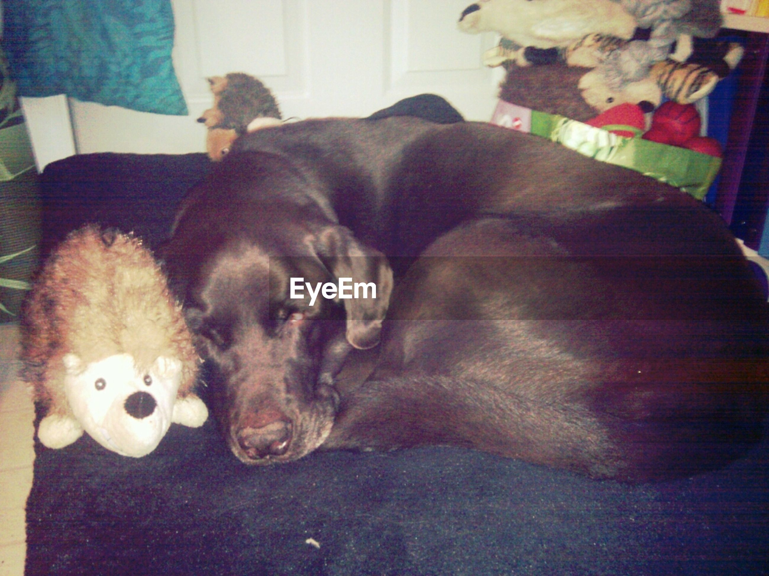 domestic animals, animal themes, pets, indoors, mammal, one animal, relaxation, sleeping, resting, domestic cat, home interior, lying down, dog, two animals, cat, home, high angle view, stuffed toy, no people, cute