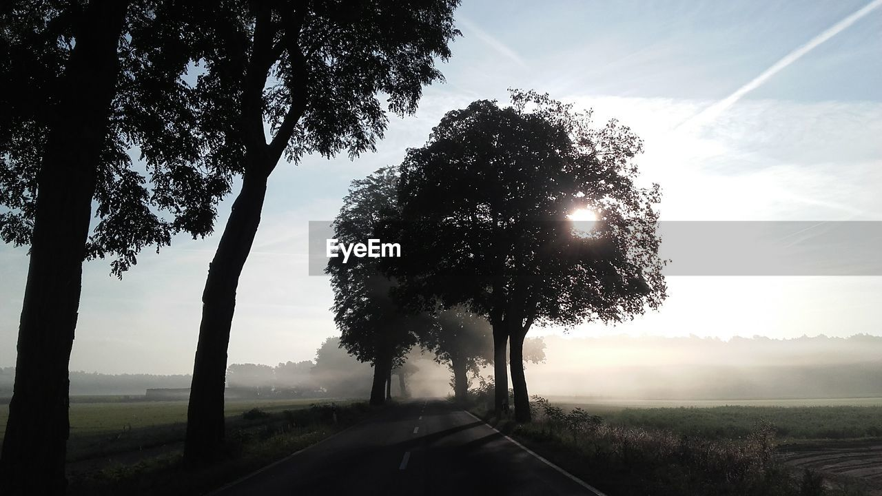 Trees by road on field against sky