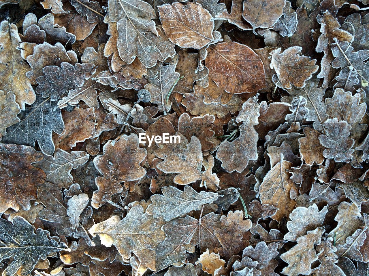 Full frame shot of dry frozen leaves