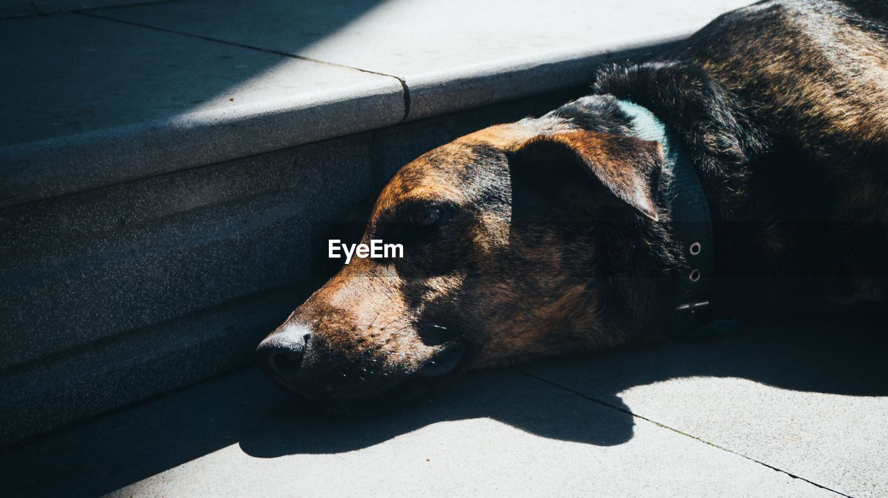 Close-up of dog lying at sidewalk