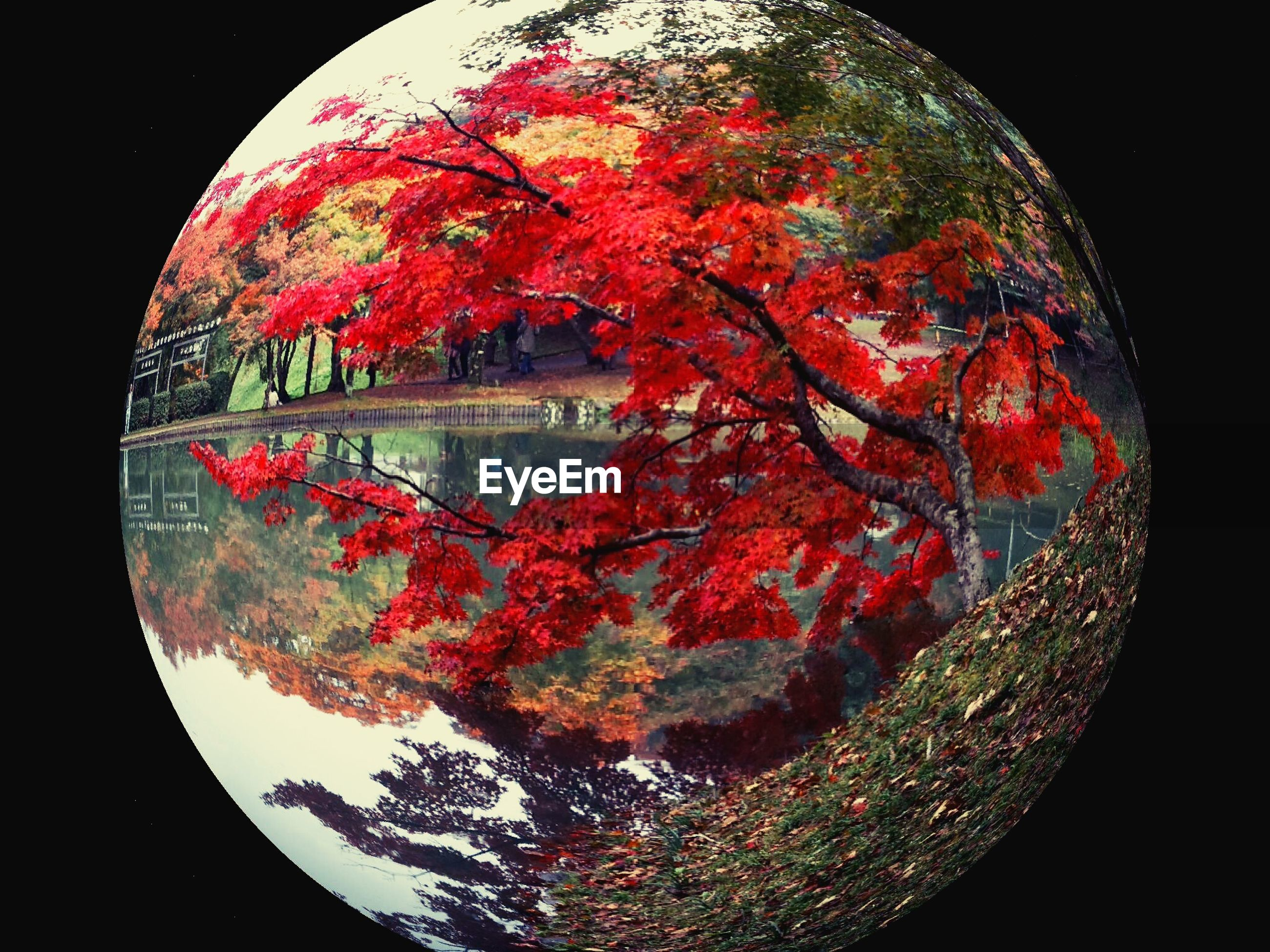 tree, red, reflection, circle, nature, tranquility, sky, water, night, no people, outdoors, autumn, geometric shape, branch, beauty in nature, close-up, tranquil scene, growth, multi colored