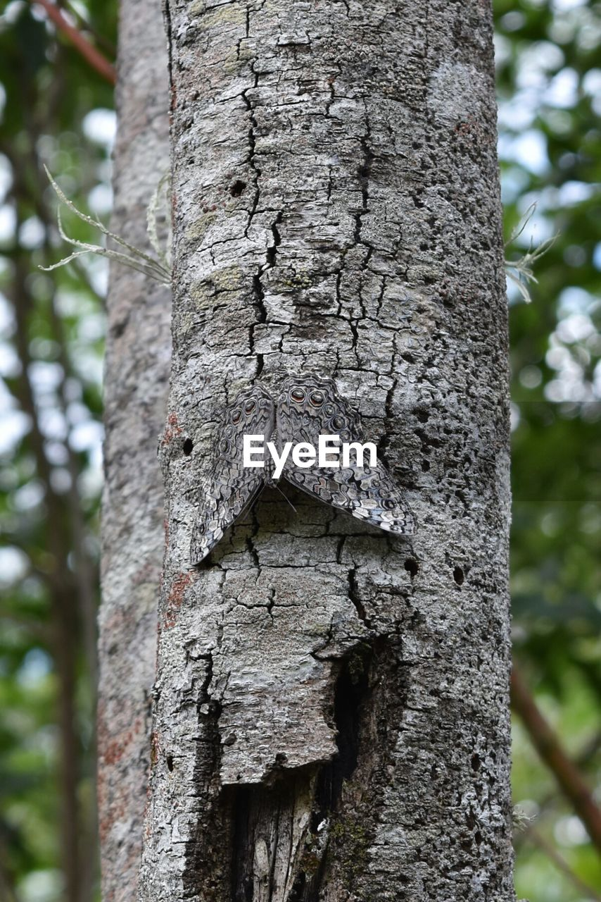 trunk, tree trunk, tree, plant, focus on foreground, day, textured, no people, close-up, nature, outdoors, growth, plant bark, animal themes, natural pattern, animal, forest, pattern, rough, creativity, bark