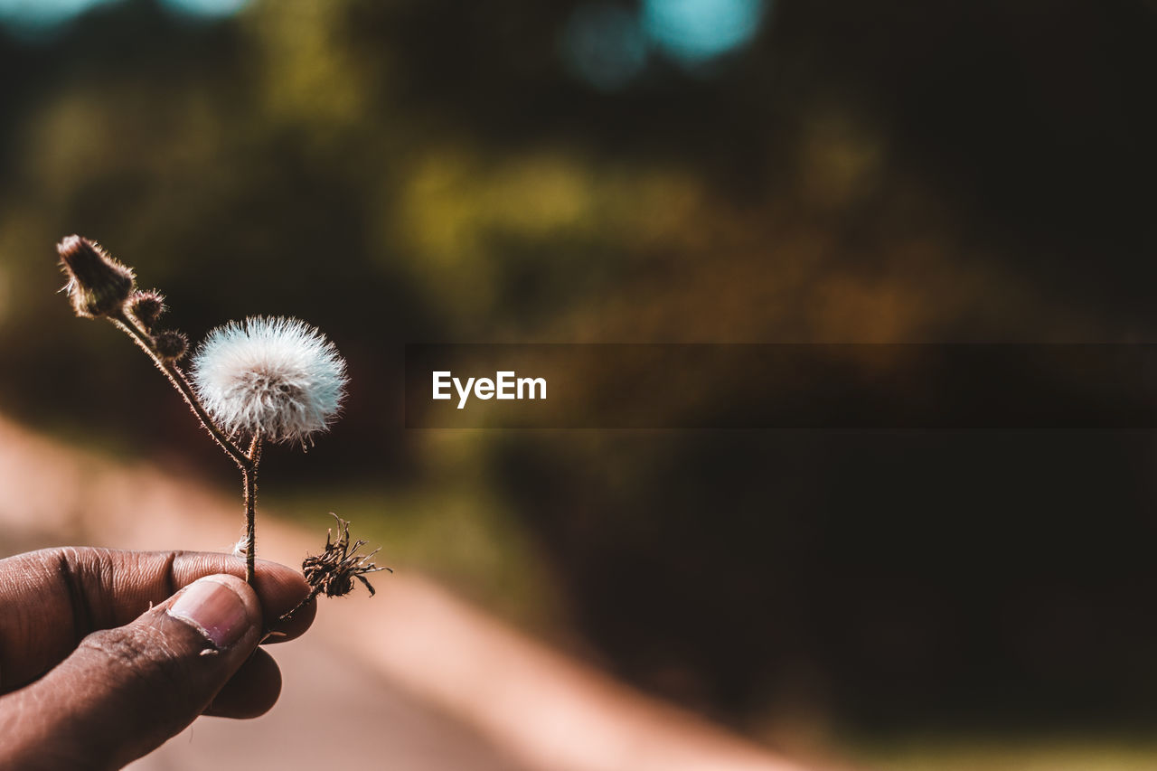 Cropped Image Of Hand Holding Dandelion Against Plants