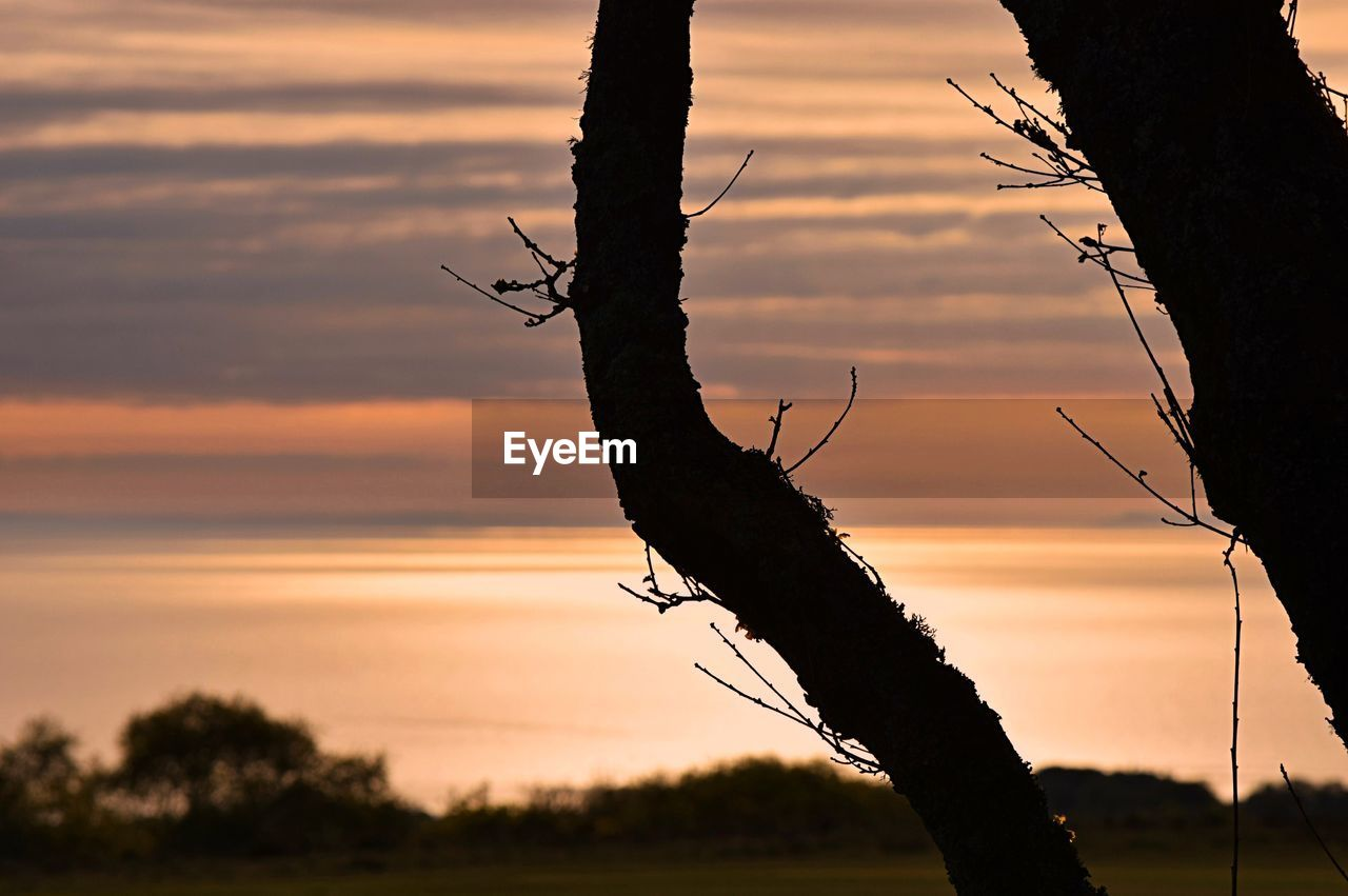 sunset, nature, tree, silhouette, beauty in nature, no people, sky, outdoors, tranquility, tree trunk, scenics, branch, dead tree, close-up, day
