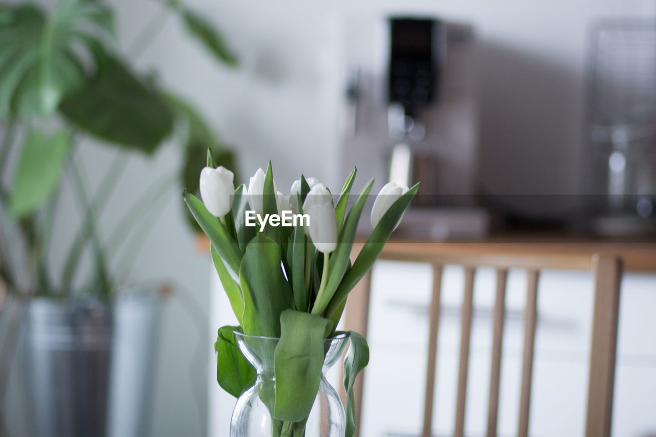 plant, flower, flowering plant, freshness, beauty in nature, no people, fragility, nature, focus on foreground, green color, vulnerability, indoors, growth, close-up, vase, white color, flower head, day, home interior, inflorescence, flower arrangement, bouquet