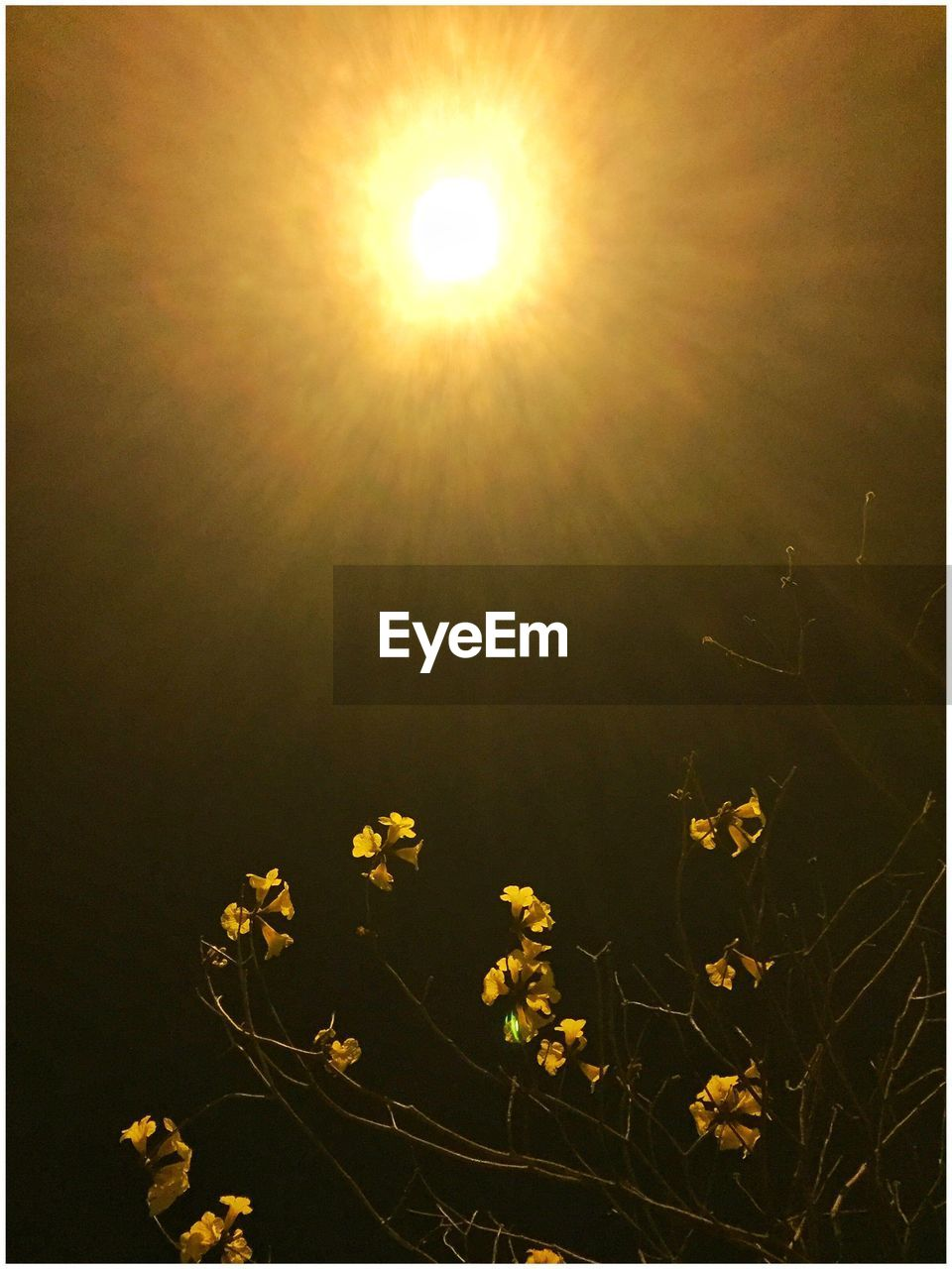 sun, flower, nature, beauty in nature, no people, yellow, outdoors, plant, growth, moon, scenics, fragility, freshness, close-up, day, sky