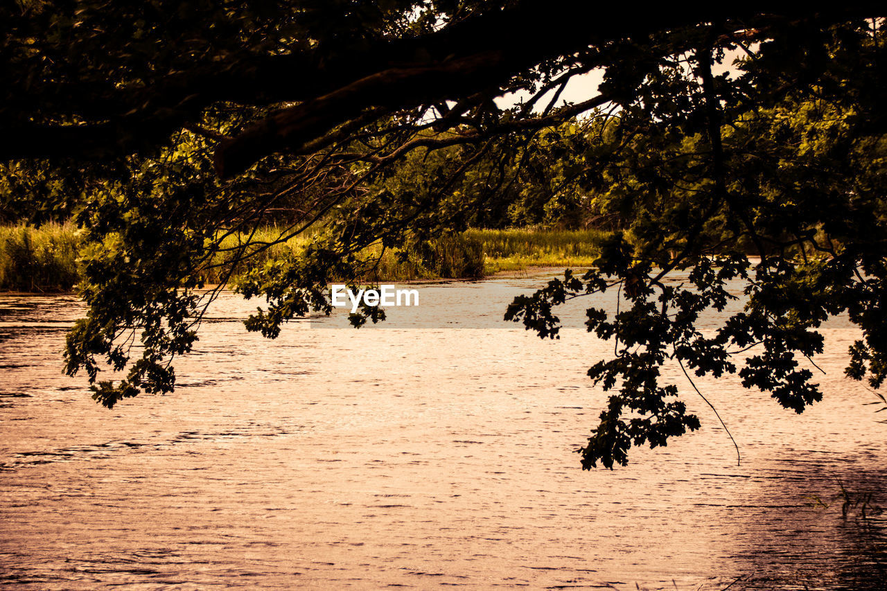 tree, nature, tranquility, beauty in nature, growth, scenics, water, outdoors, lake, no people, landscape, branch, day