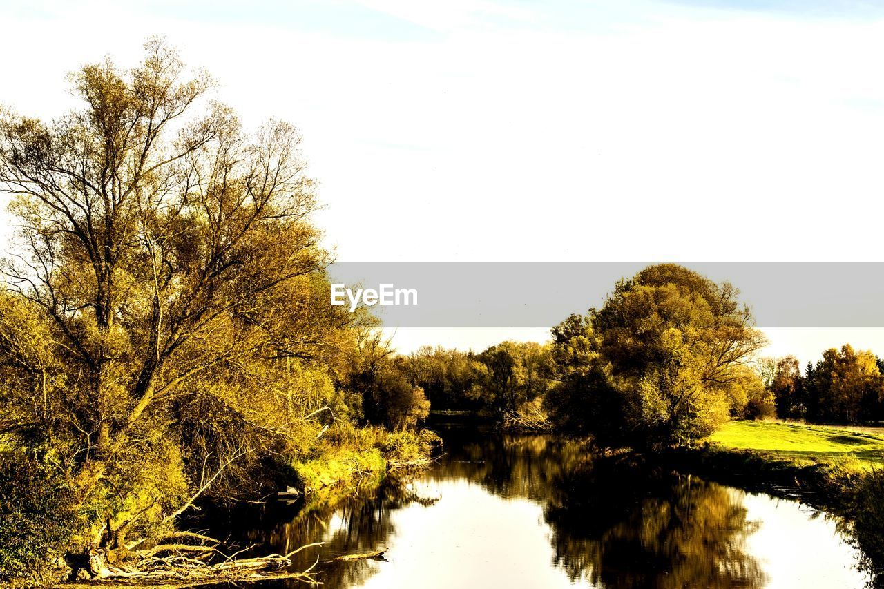 tree, water, nature, reflection, tranquil scene, tranquility, scenics, beauty in nature, no people, river, growth, sky, outdoors, clear sky, day