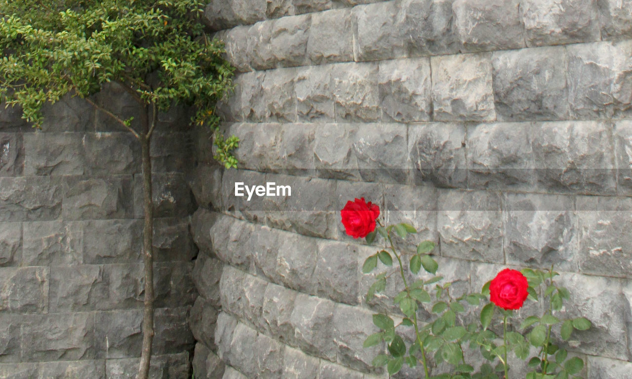 Red Flowers Growing On Stone Wall