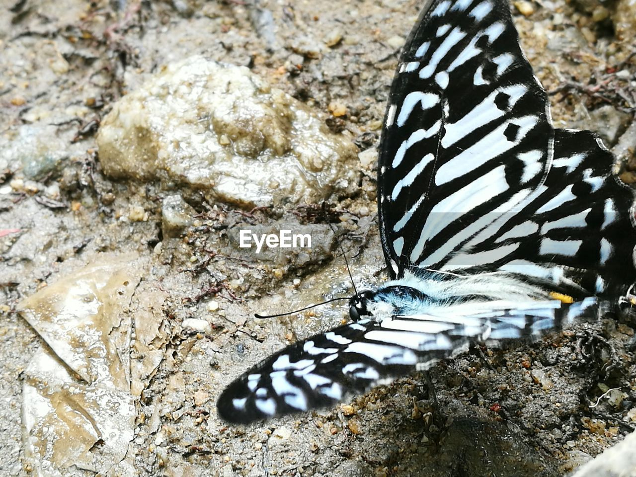 animals in the wild, animal wildlife, animal themes, animal, one animal, nature, rock, solid, no people, close-up, invertebrate, insect, rock - object, animal markings, day, beauty in nature, butterfly - insect, focus on foreground, animal wing, water, outdoors, butterfly, marine