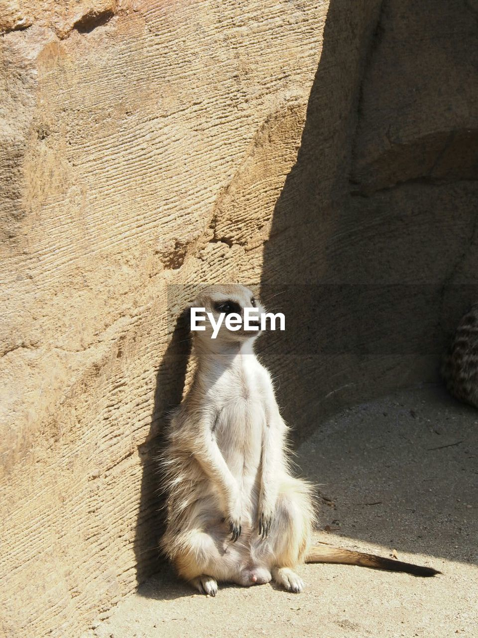 one animal, animal themes, day, sand, mammal, animals in the wild, sitting, sunlight, outdoors, meerkat, nature, no people, shadow, beach
