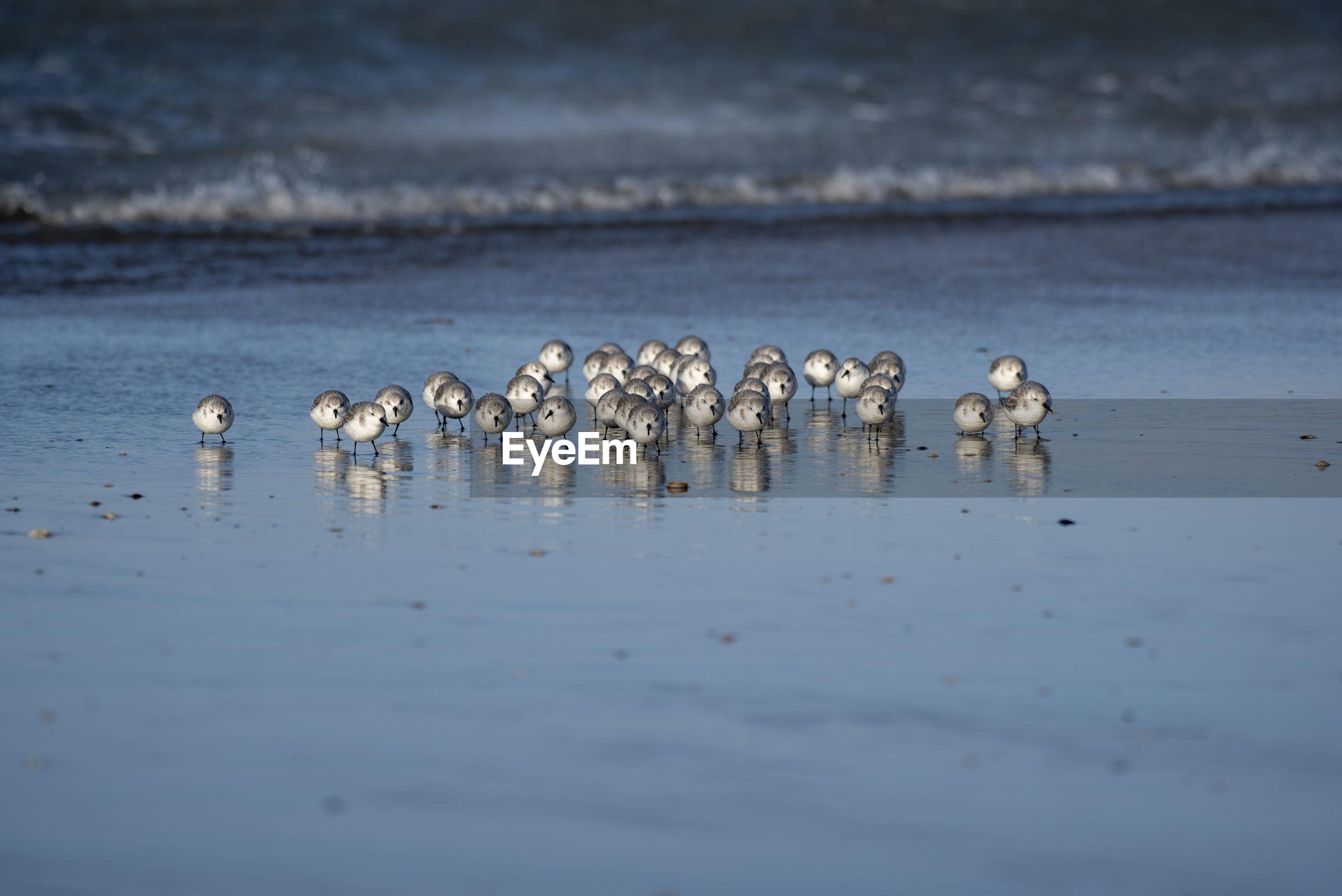 Flock of birds perching on shore at beach
