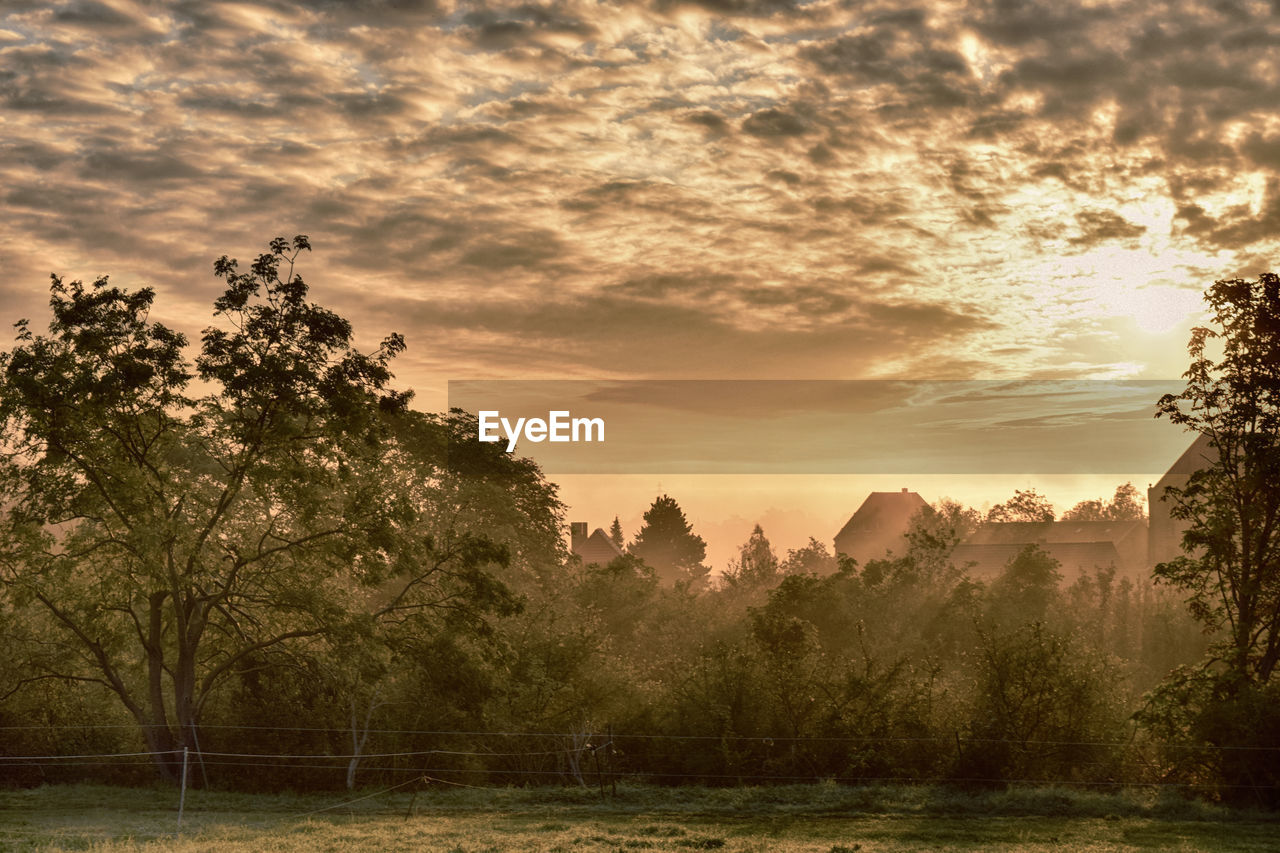 PANORAMIC SHOT OF TREES AGAINST SKY DURING SUNSET