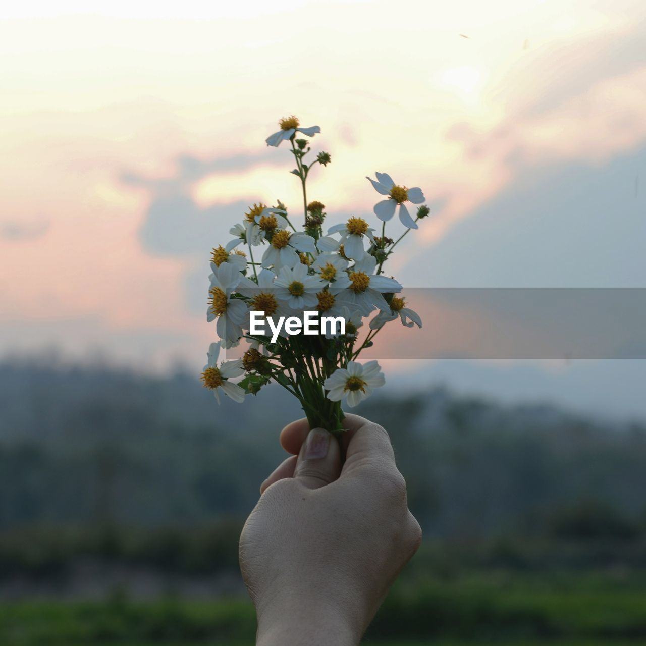 Close-up of hand holding flowers against sky