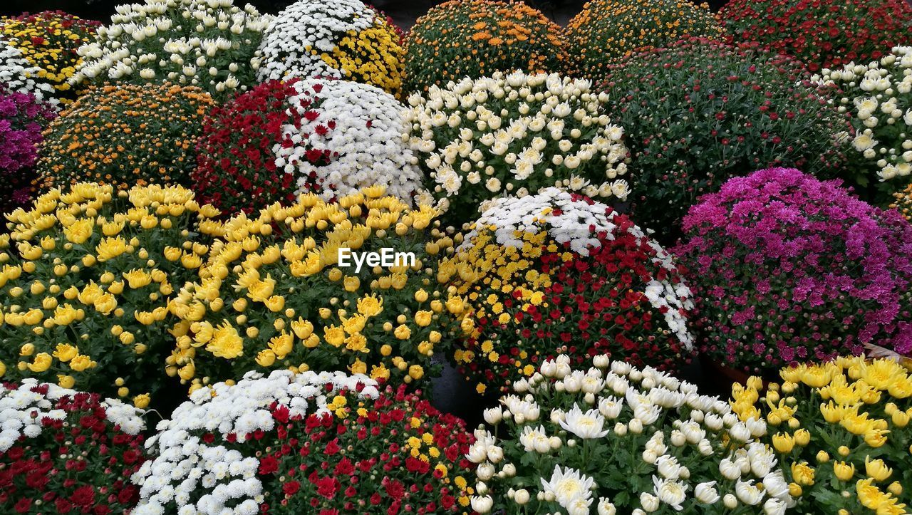 flower, flowering plant, multi colored, plant, choice, variation, freshness, beauty in nature, vulnerability, fragility, no people, full frame, abundance, nature, flower head, growth, day, close-up, flowerbed, market, outdoors, flower arrangement, flower market, floral pattern