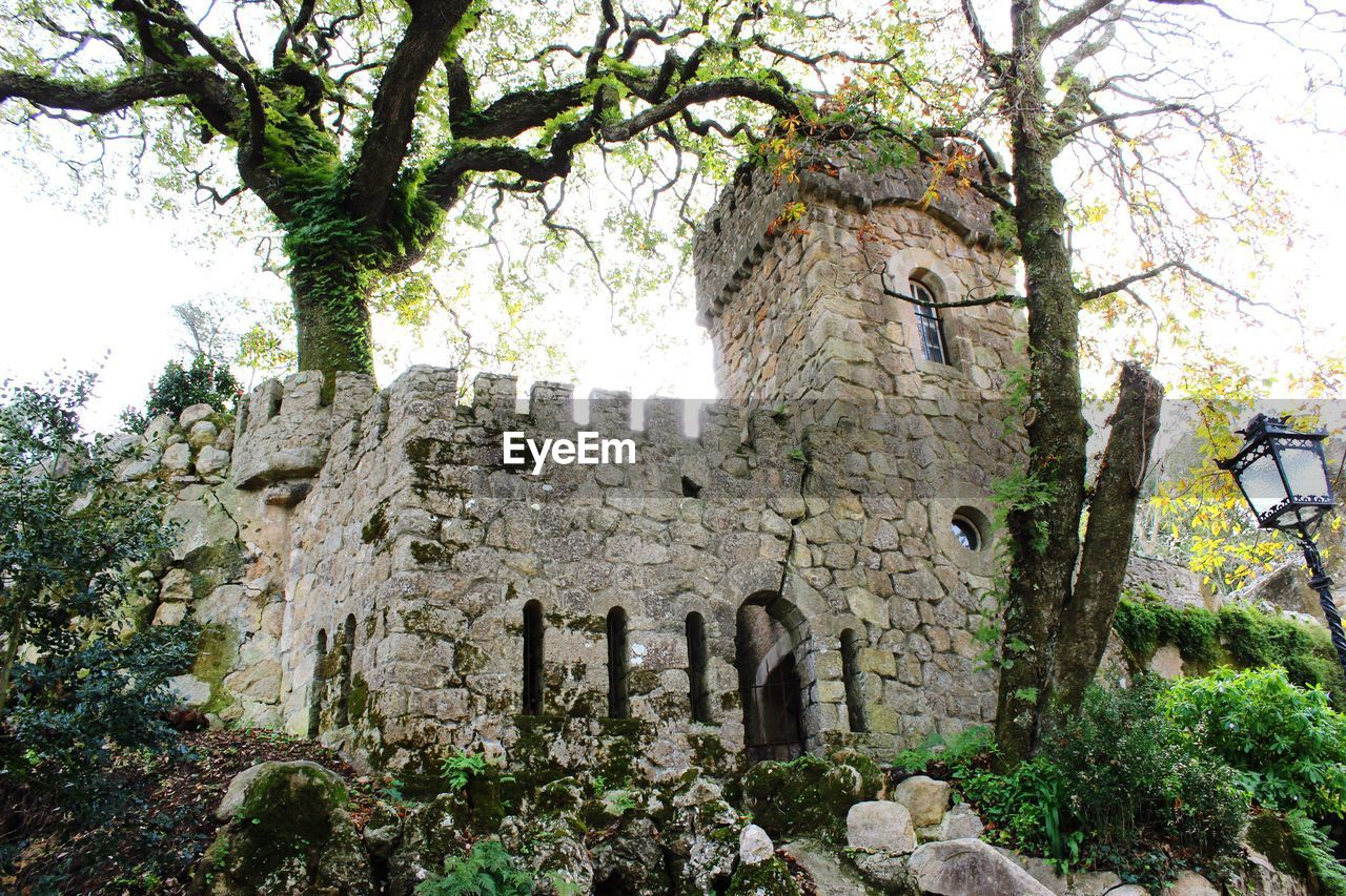 history, tree, architecture, ancient, built structure, old ruin, day, no people, building exterior, ancient civilization, travel destinations, outdoors