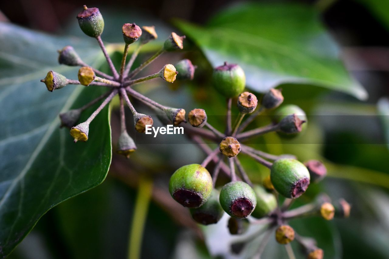 growth, plant, close-up, leaf, plant part, freshness, beauty in nature, selective focus, focus on foreground, day, fruit, green color, no people, food, nature, food and drink, flower, bud, tree, healthy eating, outdoors