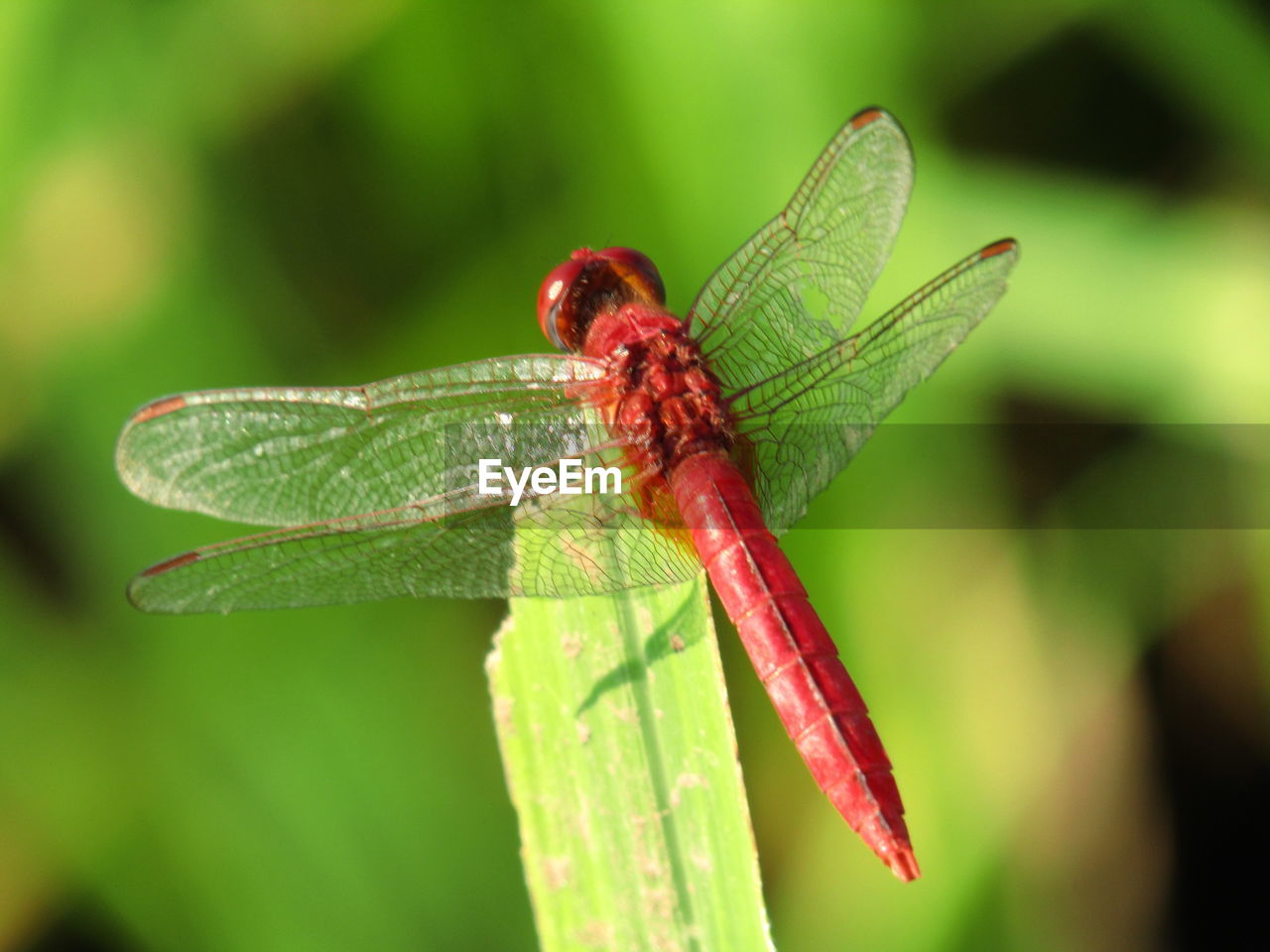 invertebrate, insect, animal wildlife, animal themes, animal, animals in the wild, one animal, plant part, leaf, green color, close-up, nature, plant, focus on foreground, no people, day, dragonfly, zoology, animal wing, outdoors