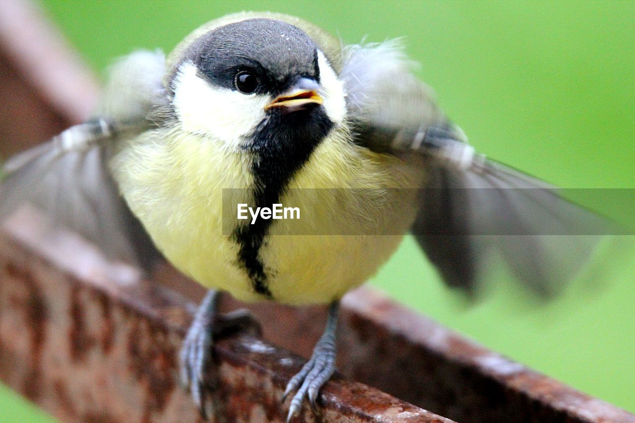 bird, animal themes, one animal, animals in the wild, animal wildlife, focus on foreground, day, close-up, no people, beak, outdoors, perching