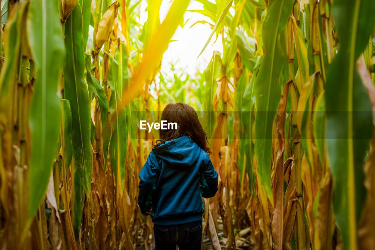 Rear View Of Girl Walking In Corn Farm